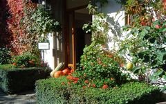 AUTUMN IN CHIANTI: GRAPE HARVESTING, NATURE AND TUSCAN CUISINE